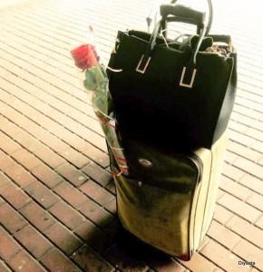 Roos in koffer