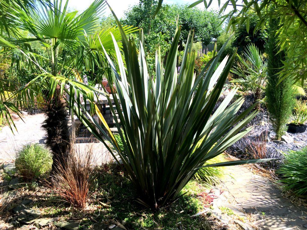 Bamboe Monnik - Groen