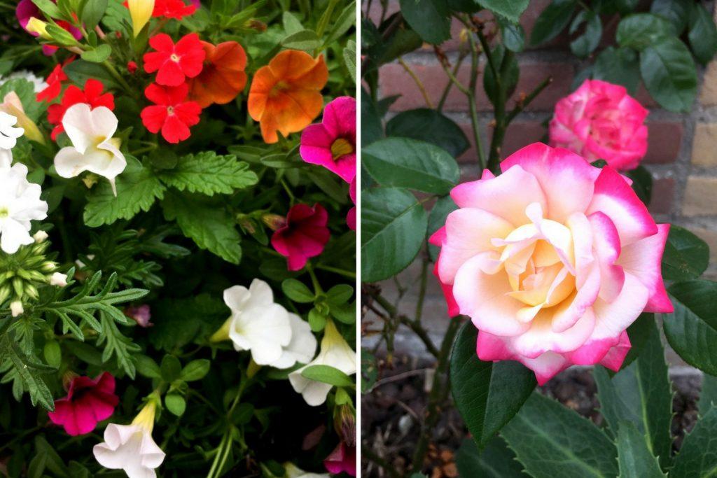 Bloemen uit de tuin - Diyaata.com