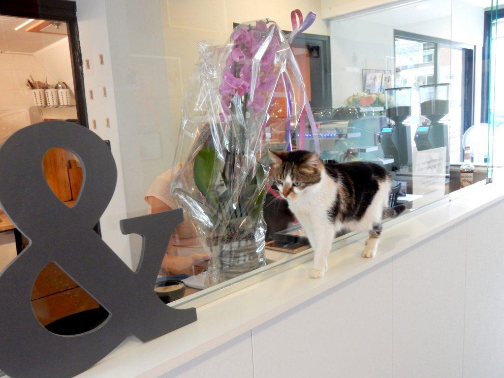 Kattencafé Kat & Schotel