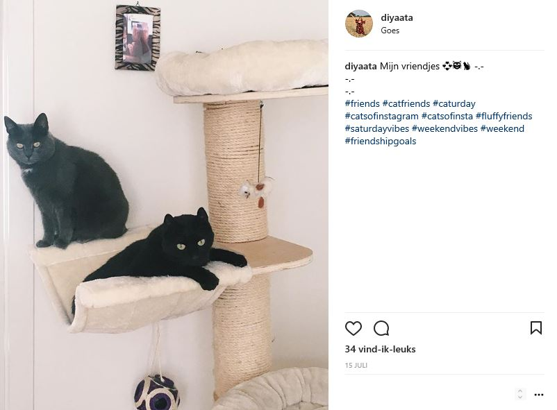 Instagram6 Diyaata