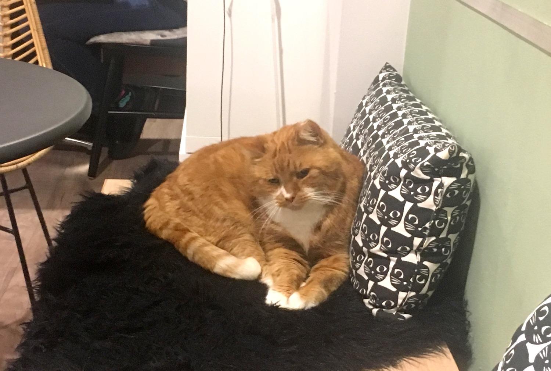 Kat en Schotel
