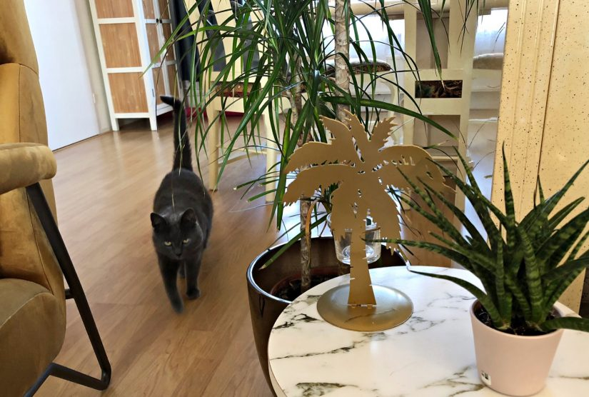 Groene planten in huis - diyaata.com